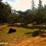 بعدسة أبو الفيلات محمد  - مصل في ساحات الأقصى