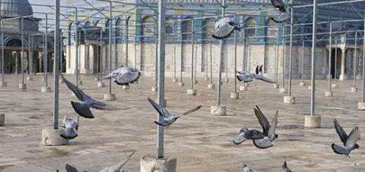 birds_at_aqsa